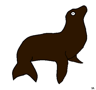seal seals sea lion drawing