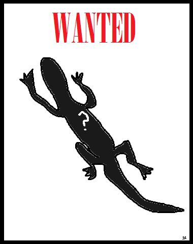 Mystery lizard, wanted